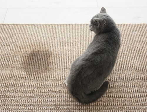 Why Is My Cat Peeing Outside the Box? 4 Factors That Influence Your Cat's Urinary Habits