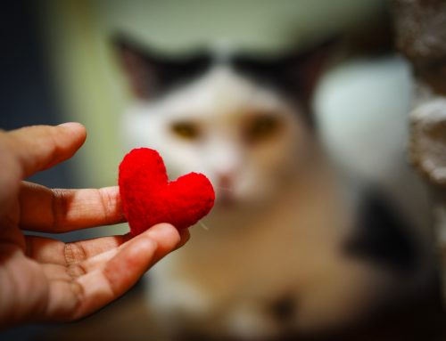 The Beat Goes On: Managing Heart Disease in Pets
