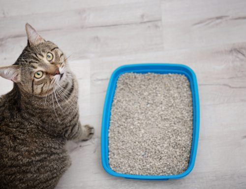5 Litter Box Rules for a Happy Cat