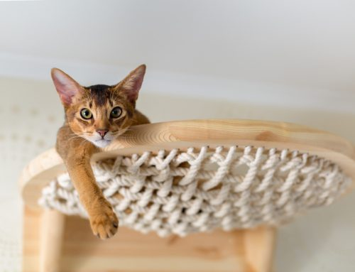 5 Creative Ways to Enrich Your Indoor Cat's Environment
