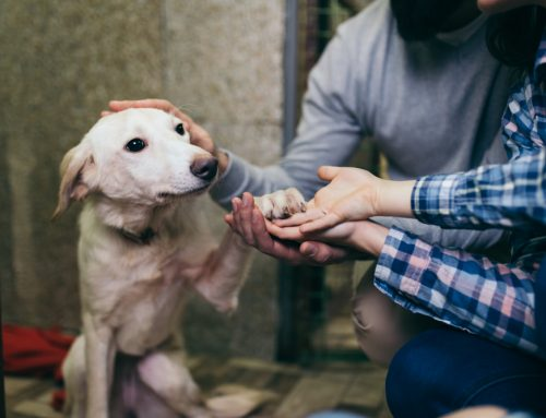 Factors To Consider When Choosing a Dog for Your Family