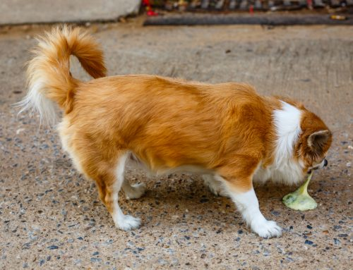 A Puking Primer for Dog Owners