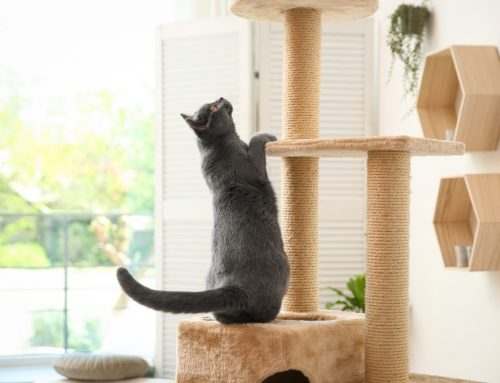 Come On, Get Happy—Enrichment for Cats