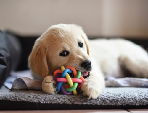 Chew On This—5 Top Tips for Safe Dog Chew Toys