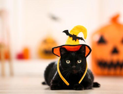 Preparing Your Pet For Halloween