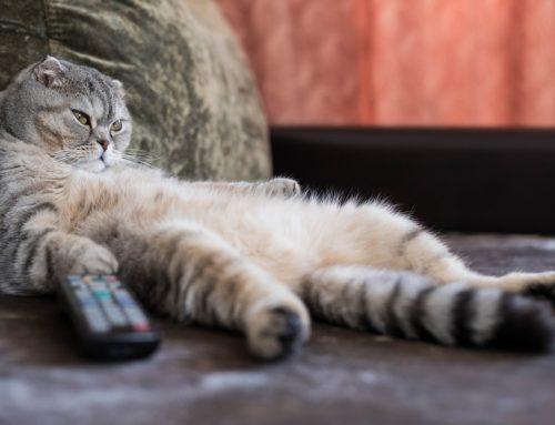 Pet Obesity FAQs